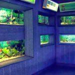 Acvariul din Constanța