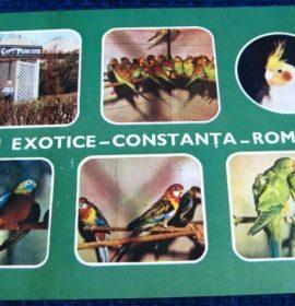 Expozitia de pasari exotice